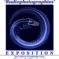 4.Expositions